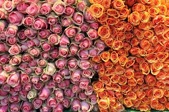 rose a thon